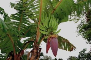 Exotic Amazonian fruits